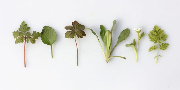 7 Uncommonly Used Herbs That May Inspire Your Next Meal