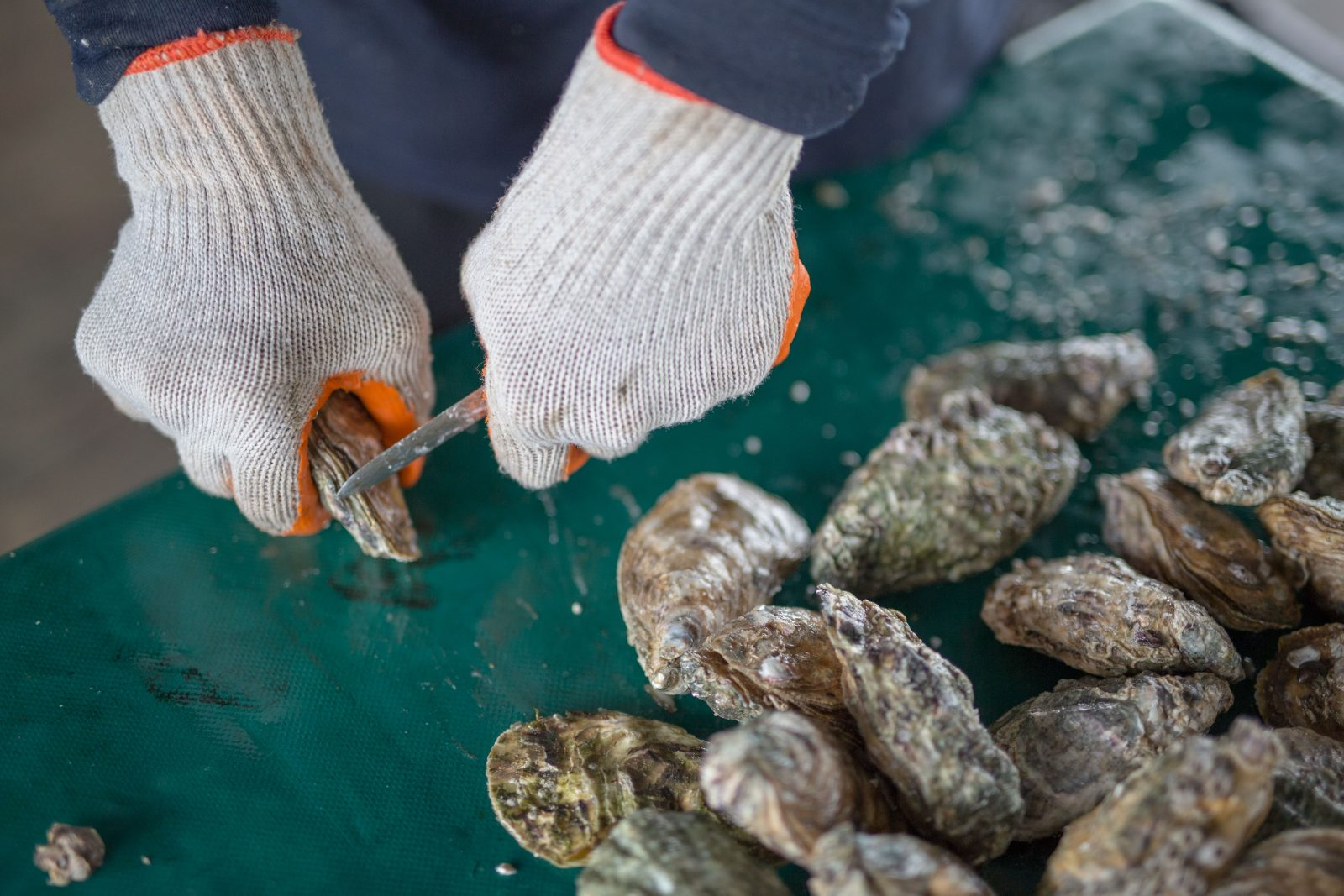 Want a taste of freshly-shucked oysters?